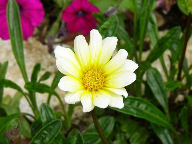 季節の花の植物園