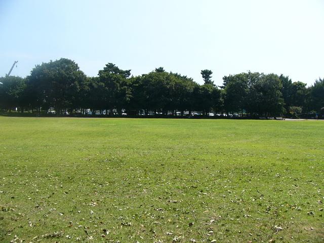 広々とした芝生がある公園