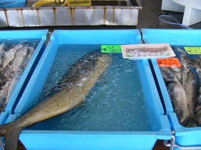 大ぶりのシイラ800円